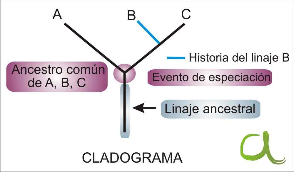 Reino protista eucariota o procariota
