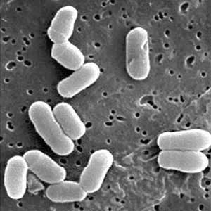 Si surge la alergia por los parásitos