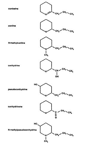 Alcaloides presentes en Conium maculatum (Vetter, 2004).