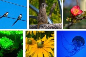 ¿Qué es la biodiversidad?