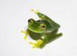La rana no es la versión femenina del sapo