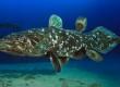El celacanto, un nadador de otro tiempo