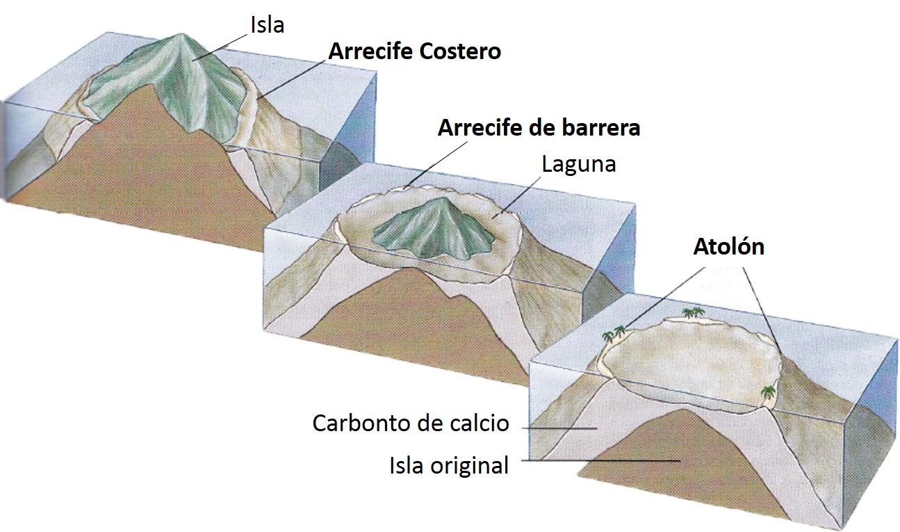 Tipos de arrecifes